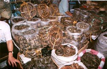 Asia 1998 China 3 Photos Www Don Smith Net
